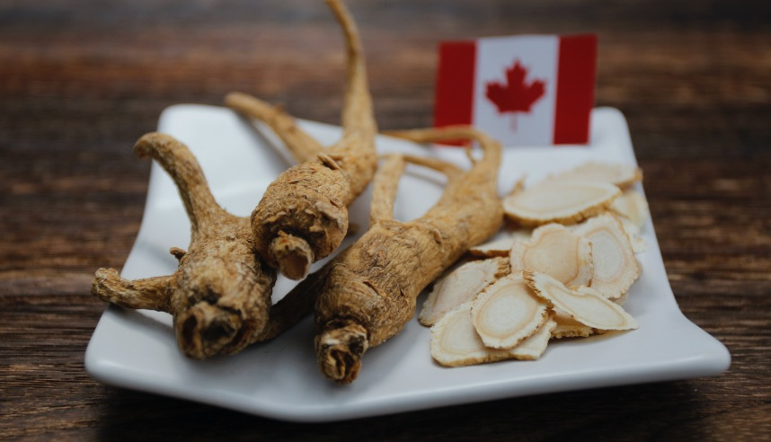 Ontario Ginseng root on plate with Canadian flag